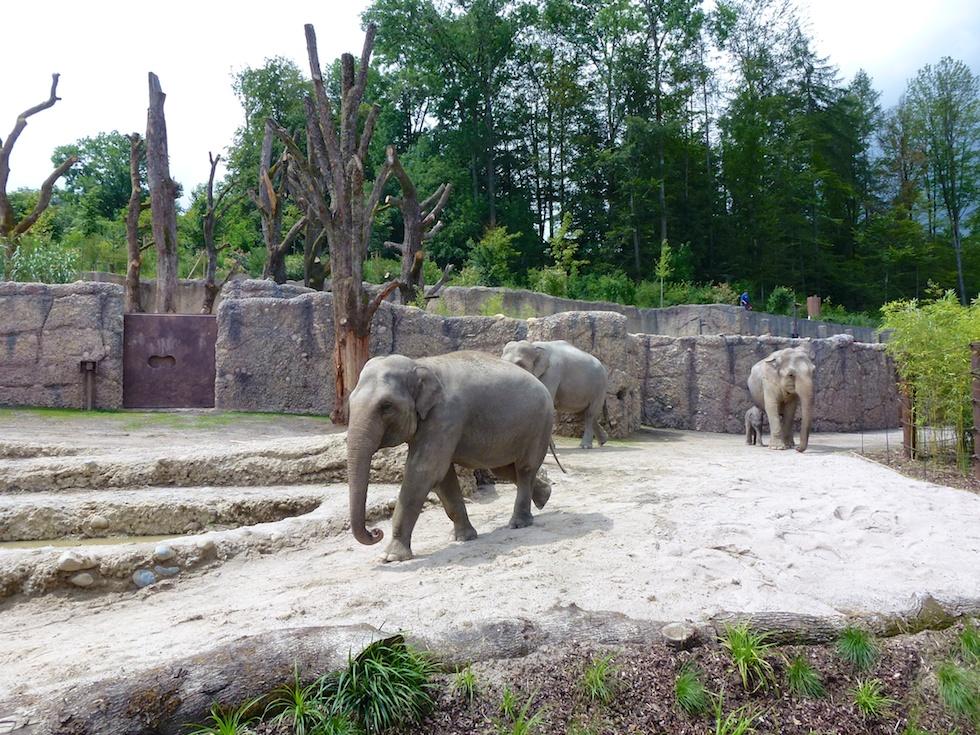 Elefanten in ihrer neuen Aussenanlage im Zoo Zürich