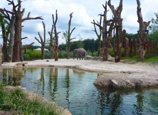 Die neue Elefanten-Aussenanlage im Zoo Zürich