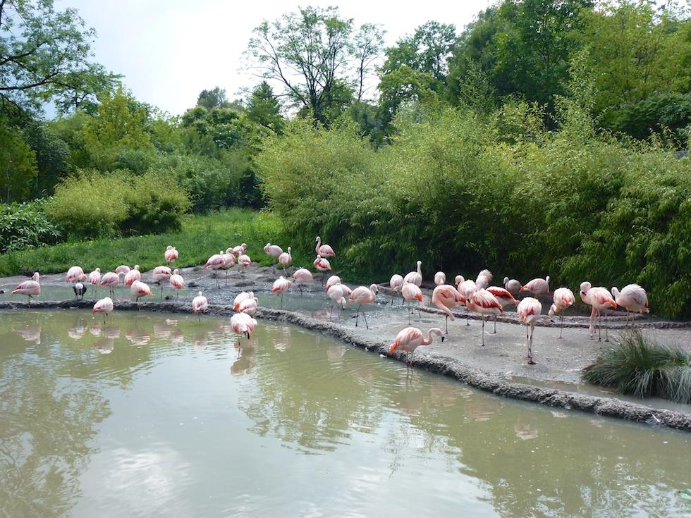 Flamingos im Zoo Zürich