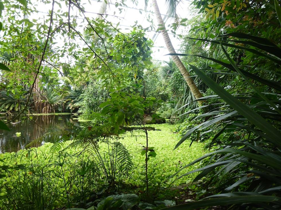 Tropische Temperaturen, dicht bewachsene Natur: Die Masoala-Halle im Zoo Zürich