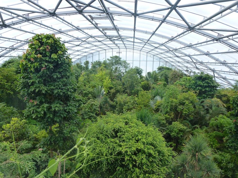 Die europaweit grösste Regendwaldhalle - Die Masoala-Halle des Zoo Zürich