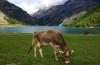 Der Lago di Livigno: Fluch und Segen zugleich