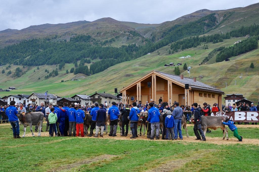 Alpenfest Livigno: Das ganze Dorf ist bei der Viehschau auf den Beinen.