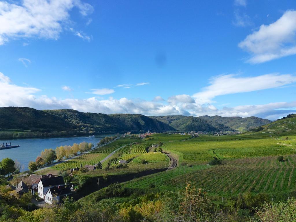 Weinreben, Weinreben, Weinreben: Blick über die Wachau-Region