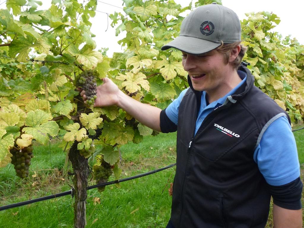 Ein schlechter Sommer für die Weintrauben: Salomon Undhof-Kellermeister Thomas  Ganser instruiert uns für die Weinlese.