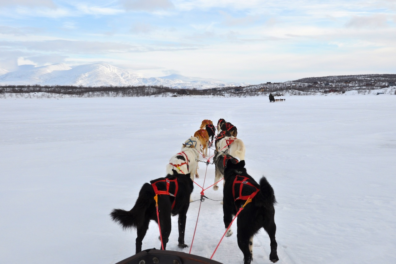 Im Hundeschlitten über den Torneträsk-See: Eine holprige, aber faszinierende Angelegenheit