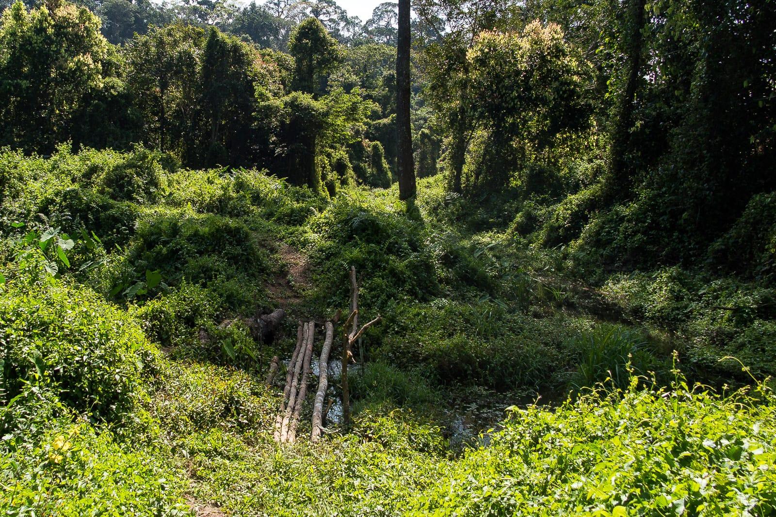 Über sieben Brücken musst Du gehen... Auch im Khao Yai Nationalpark