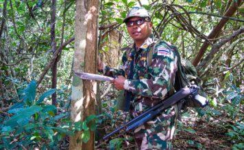 Pflanzen zum Überleben im Dschungel: Toto erklört, wie's geht